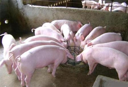 养猪场20类常备的药物,没有的赶快补齐!