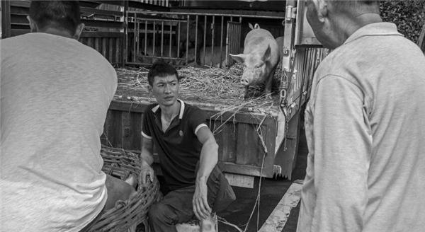 3、黔西南兴义市底层市民生活黑白摄影欣赏,生猪买卖