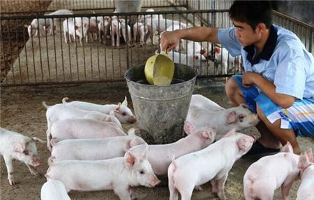 告诫!告诫!2018年养猪,不亏本金就是赚!
