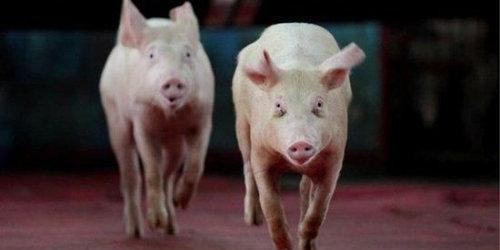 董广林:猪价这么低,为啥教头却认为是企业难得的转型契机?