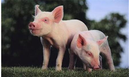 2018年04月21日(20至30公斤)仔猪价格行情走势