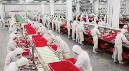 贸易战能减少进口?巴西对华出口猪肉已猛涨152%!