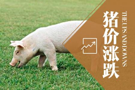 2018年04月22日全国土杂猪生猪价格行情涨跌表