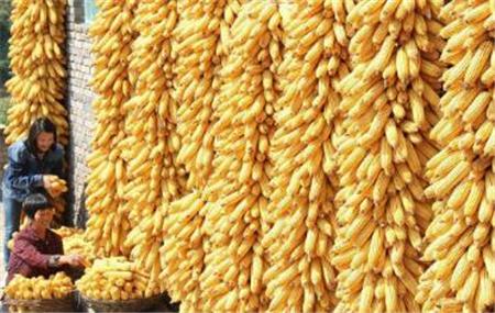 2018年04月22日全国玉米价格行情走势汇总