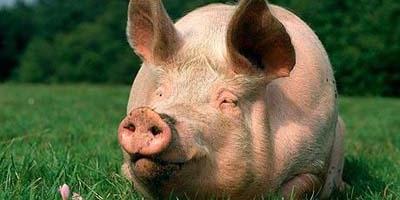 猪价还未到谷底!未来进口肉将减少!