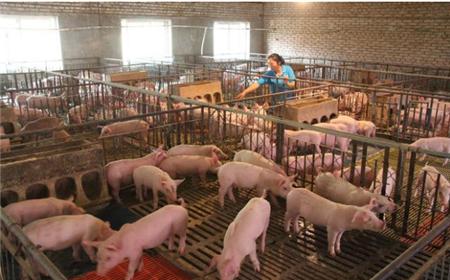 猪肉价格一季度下降9.9%,还会继续跌吗?