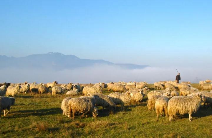 无抗时代的营养策略 | 抗生素替代品存在吗?