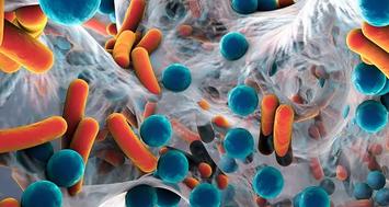 微点评 | 抗生素对肠道微生物的调节作用