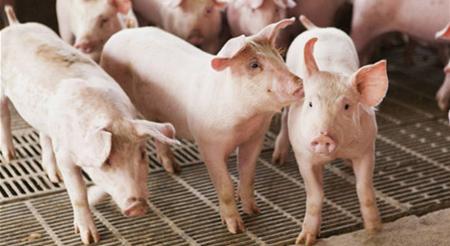 2018年04月24日(20至30公斤)仔猪价格行情走势