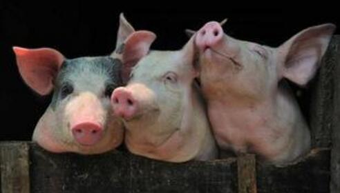 上半年跌,下半年涨?可市场上并不缺猪……