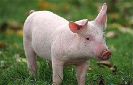 2018年04月25日(15至19公斤)仔猪价格行情走势