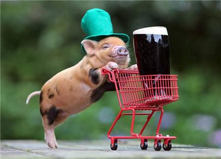 """一个养猪户眼中的""""2018猪价""""?高峰期应在农历5到9月……"""