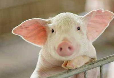 猪价跌至阶段性底部,但扩张仍是运作模式……