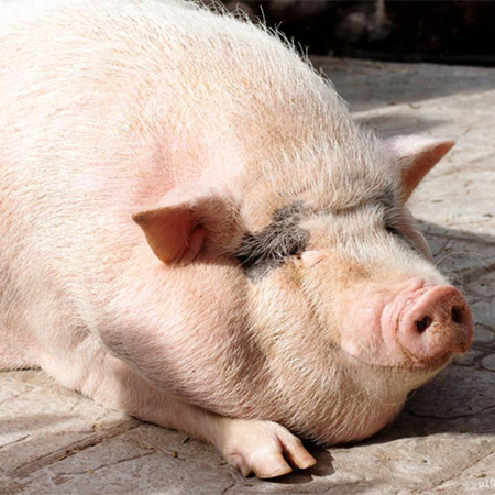 养殖户何去何从?深亏未脱离,进口肉又有新动向!