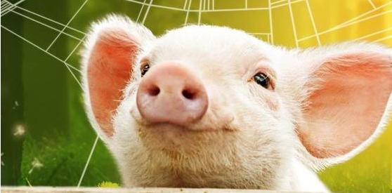 4月是黎明前的黑暗,预计五一猪价稳中有升!