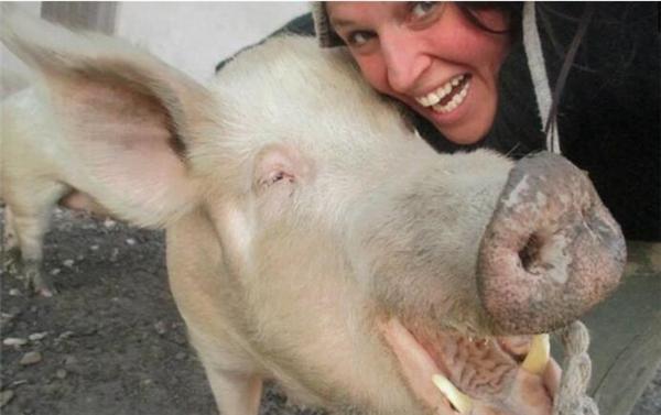 意大利女子拯救猪...