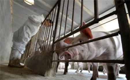 别让猪周期绑架,关注这些才是重点!