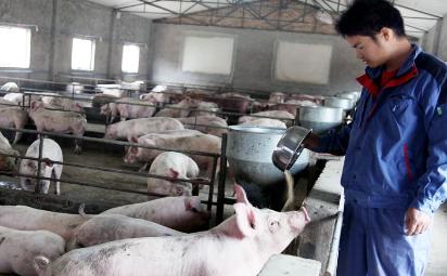 董广林:猪场用惨重的损失告诉你什么叫做盲从的代价!