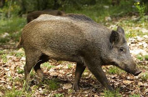 身家百亿猪肉佬北大演讲:建议开课教学生杀猪?