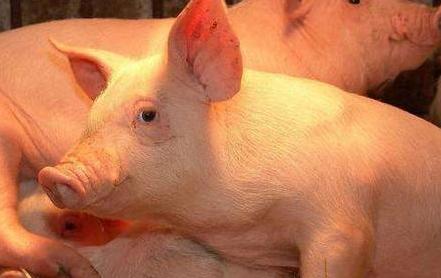 2018年05月01日(15至19公斤)仔猪价格行情走势