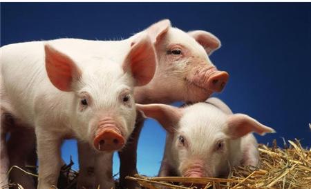 2018年05月02日(20至30公斤)仔猪价格行情走势