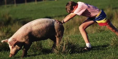 猪价行情进入拉锯战,拉来拉去,受伤的是谁?