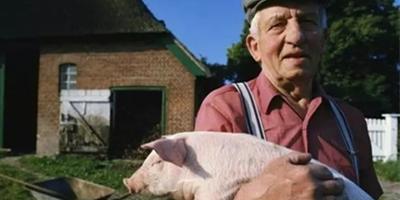猪价低迷,美国的养猪佬也焦躁不安,到底是为啥?