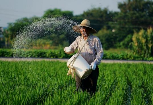 农民真不容易,养猪的猪价大跌,种地的小麦减产!