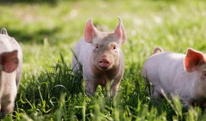 饲料暴跌、严打走私、猪价探底,助推猪价回升?