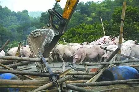 史上最严拆迁规定来袭!年出栏超50头猪场全部拆除?