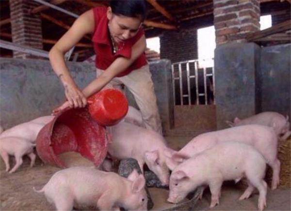 留守妈妈们的养猪生活~