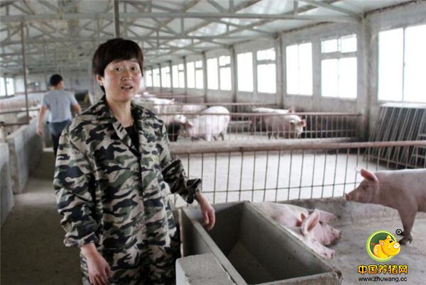猪肉价格走低 夫妻返乡创业养猪一年赔钱近十万元!