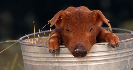 """养猪大户与""""猪周期""""博弈10年,提出了破解""""猪周期怪圈""""的3点看法"""