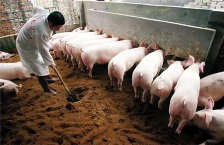 养殖场臭味的危害,你知道吗?如何解决?