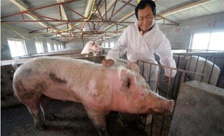 听说猪价行情马上要涨了,你手里还有猪吗?
