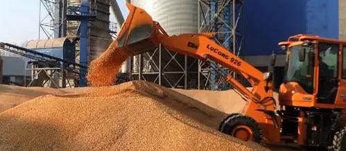 """玉米价格震荡""""触底"""",或将开启阶段性反弹!"""