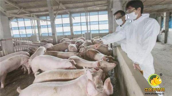 养猪可以年入40万?看硕士毕业生如何超越老农民!