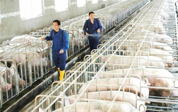 【商丘养殖】规模化猪场养猪技术规范,不同猪舍的要求