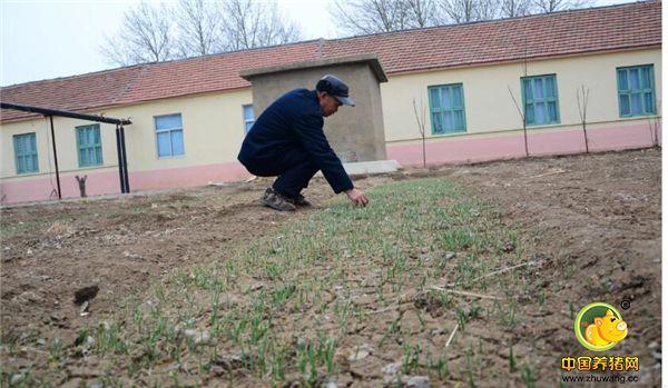 4、老人们自己亲手种出来的菜,不仅无公害,而且吃着也香。