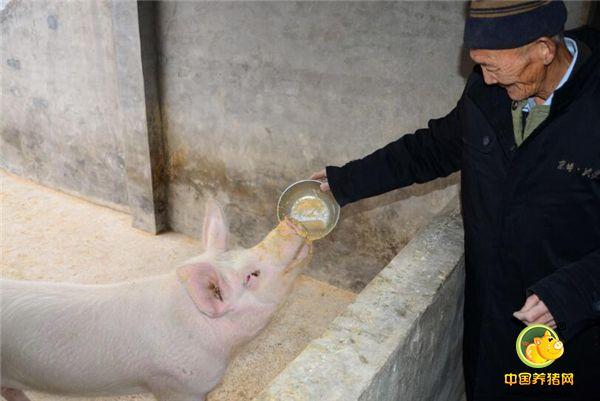 """山东滨州这个敬老院厉害了!老人们养猪种菜""""自给自足"""""""