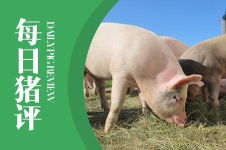 05月15日猪评:冻品价格下滑、屠企收购难,助推猪价上涨!