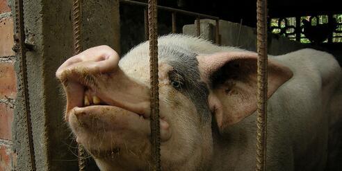 想一想,问问自已,养这多年猪,是亏还是赚?得到什么失去什么?还是否继续养猪?不养猪了又能干什么?