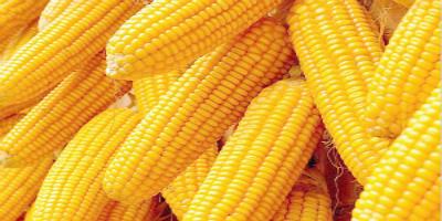 2018年05月17日全国玉米价格行情走势汇总