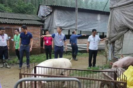 迅猛!环保督查进广东,违规猪场当天被清拆,多省畜禽治污再发力