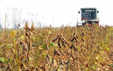 大豆进口量持续下降,中国:不靠你们!爷要自己种!