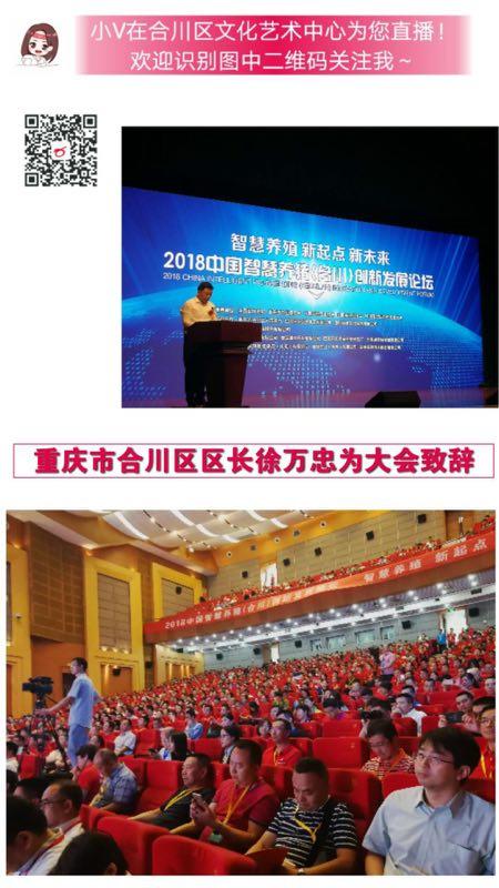 2018中国智慧养猪(合川)创新发展论坛现场分享