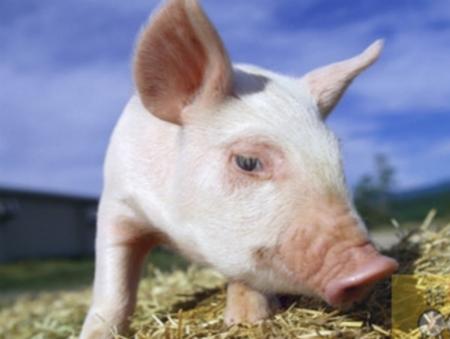2018年05月19日全国内三元生猪价格行情涨跌表