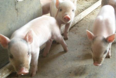 2018年05月19日全国外三元生猪价格行情涨跌表