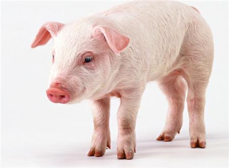 2018年05月21日全国土杂猪生猪价格行情涨跌表