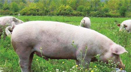 2018年05月20日全国土杂猪生猪价格行情涨跌表